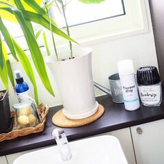 100均/節約/セリア/キャンドゥ/簡単/おしゃれ/... トイレの洗面。100均アイテムや観葉植物…(1枚目)