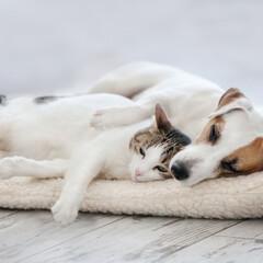 犬/猫/平屋/一戸建て/縁側/テラス/... ペットも家族も安心して暮らせる空間、理想…(1枚目)