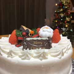 クリスマスパーティー/ワンコのケーキ/ワンコのご飯/クリスマスツリー/クリスマスケーキ/ミニチュアダックスフンド/... メリークリスマス🎄🎅 あれこれ食べすぎて…