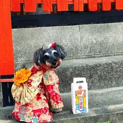 七五三/ペット/犬/おでかけ/風景/ハンドメイド 先日、lucia ちゃんの 七五三参りへ…
