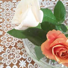 薔薇/初夏/フラワーアレンジメント/夏に向けて/季節インテリア/簡単/... 昨夜の大雨とうって代わり🌈 今朝は晴天で…