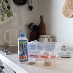 冷蔵庫の自動製氷機クリーナー 1回分 200ml(台所用洗剤)を使ったクチコミ「暑くなると、おうちかき氷が楽しみな季節!…」