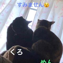 表情/猫/黒猫/親子 シルエットが綺麗だなぁと撮ってたら くろ…