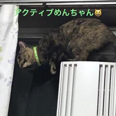 猫/めん 晩ご飯食べたらすぐ寝たから元気いっぱい。…