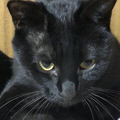 毛繕い/にこ/黒猫 マイペースなにこ😺たぶん自分は猫だと思っ…