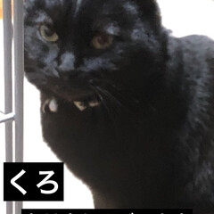 黒猫/くろ/にこ/めん/猫/朝のご挨拶/... 今日は雨ですね。2週間ぶりの病院。 旦那…