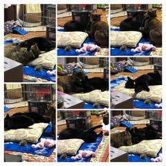 必需品/ストーブ/猫/めん/にこ/黒猫 にこはストーブの前でゴロゴロ😽 ストーブ…