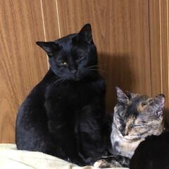 黒猫/にゃんこ同好会 いつも3匹くっついて寝るのは良いけどなぜ…