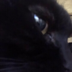 誕生日フォト/黒猫/くろママ 今日はくろママがお家に入った日。たまたま…(2枚目)