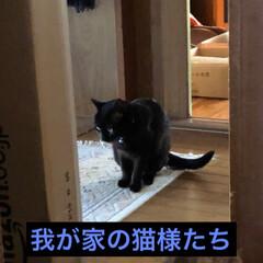 黒猫/にゃんこ同好会/うちの子ベストショット まだまだ体調が落ち着かない。 ぼちぼちと…