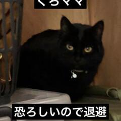 大騒動/表情/黒猫/猫 引っ越して来た時はじめは数匹うちへ遊びに…(3枚目)