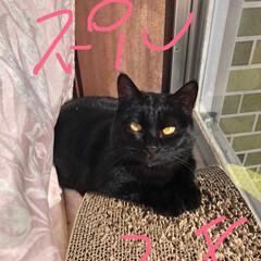 黒猫/猫/にゃんこ同好会/うちの子自慢 今日はくろの2歳の誕生日🎊 この1年家の…(1枚目)
