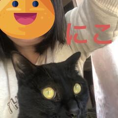 猫/めん/黒猫/くろママ/にこ 3匹そろって切り株に乗ってる💕3匹を抱き…(3枚目)