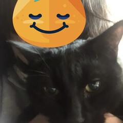 黒猫/にこ/暮らし にこが時間を追うごとに元気になってきまし…