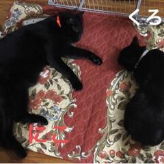 親子/黒猫/寝顔/猫 晩御飯を食べて遊んだら暖かいストーブ前で…