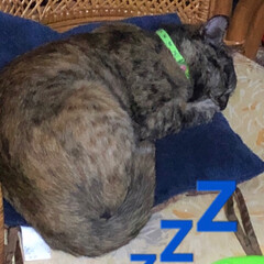 にゃんこ同好会/うちの子自慢 昨夜は私がなかなか寝付けず猫様方の様子を…