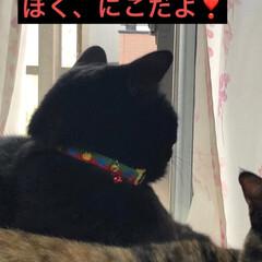 表情/寝顔/猫/黒猫 にこはめんとくろママと寝てたけど目を覚ま…