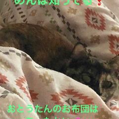 猫/爪とぎ/黒猫 今朝のうちの女子組にゃんこ😺 朝落ち着く…