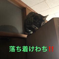 大騒動/表情/黒猫/猫 引っ越して来た時はじめは数匹うちへ遊びに…(7枚目)