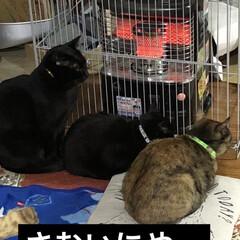 食事情 今朝は一段と寒い😨猫様たちはストーブに直…