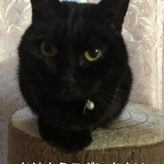猫/めん/黒猫/にこ/くろ/朝ご飯/... この頃日に日に遊んだりまったり寝たり遊び…