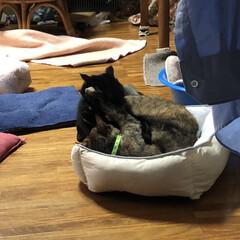 親子/めん/猫/くろ/黒猫 珍しくくろがめんにケンカをぶっかけてた⁉…(8枚目)