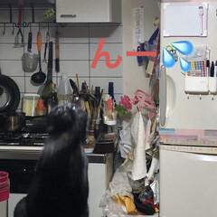 にこ/黒猫/猫/limiaキッチン同好会/キッチン/暮らし なんか、しだしたなぁとみにいくとにこが …(3枚目)