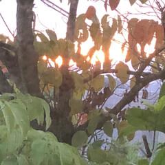 暮らし 今朝窓をみたらステキな光を浴びた。久しぶ…