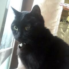 誕生日フォト/黒猫/くろママ 今日はくろママがお家に入った日。たまたま…(8枚目)