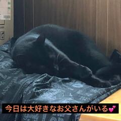 黒猫/にゃんこ同好会 先週はいろいろ忙しく私はギブアップ😵旦那…(2枚目)