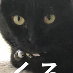 母子猫/黒猫/キメ顔 今日は我が家の猫様方のキメ顔❣️ くろが…