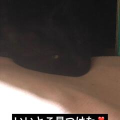黒猫 あれーくろはどこで寝てるのかな?と探して…