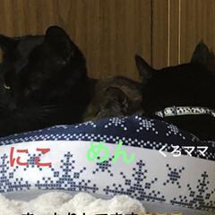 にこ/くろママ/めん/黒猫/猫/今朝の猫様 雨模様の空 お陰で暖かいです。 猫様たち…