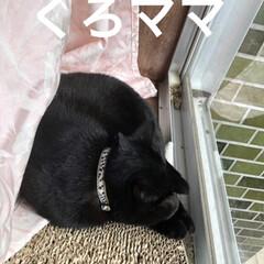 家族/黒猫 今朝は私が早く起きた為かいつになく朝の運…