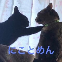 きょうだい/寝顔/黒猫/猫 にことめんは仲良し。性格は全然違うけど最…