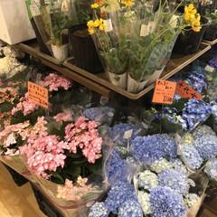 お花/おでかけ/暮らし 暖かくなり売ってるお花も季節が変わってき…