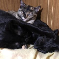 GW/にゃんこ同好会/おやすみショット それぞれで活動するようになった3匹。久し…