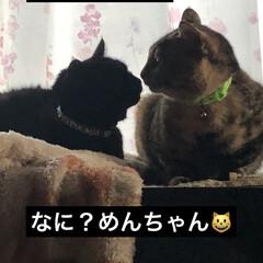 猫/黒猫/親子/リミアの冬暮らし 朝ごはんを食べてしばし休憩🥰朝から かあ…