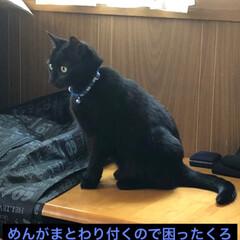黒猫/にゃんこ同好会 まだまだ甘えん坊なめんは隙を見つけてくろ…(2枚目)