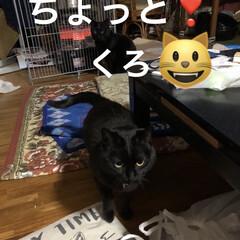 くろ/にこ/黒猫/猫/めん/新生活/... おはようございます😃 朝から猫様もごはん…(4枚目)