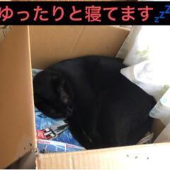 黒猫/にゃんこ同好会 夜のひと時それぞれ好きな場所で寝てたのに…