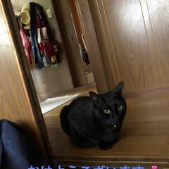 黒猫/にゃんこ同好会 今朝目覚めると足元に温もりが⁉️ 見ると…