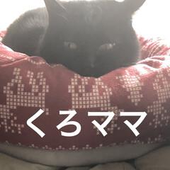 猫ベッド/親子/くろママ/めん/猫 今年も毎週の通院が始まりました。 今日は…