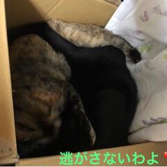黒猫/にゃんこ同好会 夜のひと時それぞれ好きな場所で寝てたのに…(7枚目)