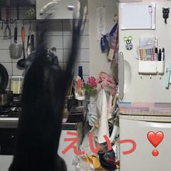 にこ/黒猫/猫/limiaキッチン同好会/キッチン/暮らし なんか、しだしたなぁとみにいくとにこが …(2枚目)