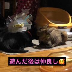 黒猫/にゃんこ同好会 どんなに激しく絡んでも毛づくろいしあう仲…