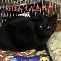 くろ/にこ/黒猫/猫/めん/新生活/... おはようございます😃 朝から猫様もごはん…(6枚目)