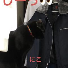 めん/猫/黒猫/くろママ/にこ/暮らし/... 今日も一日お疲れ様でした。この頃元気な私…