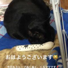 ストーブ/猫/家族/黒猫 昨日1日ゆっくりさせてもらい復活🥰 朝か…