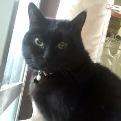 誕生日フォト/黒猫/くろママ 今日はくろママがお家に入った日。たまたま…(6枚目)